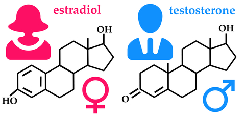 meaning of testerone