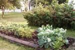 Mamma's garden